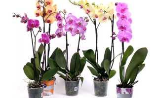 (Русский) Орхидеи в горшках