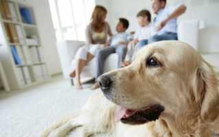 Как собаки реагируют на обман