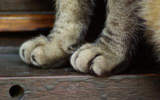 7 правил, как уберечь мебель от порчи животными