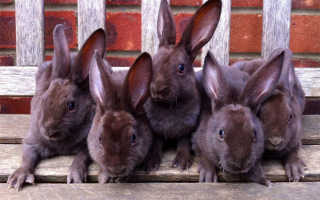 (Русский) Промышленное кролиководство